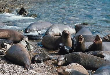 La mitad de los vertebrados en peligro de extinción viven en islas
