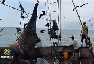 Piden firmas para anular acuerdo de Incopesca de dar permisos a pesca de arrastre