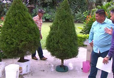¿Cómo se debe colocar y cuidar el árbol de navidad?