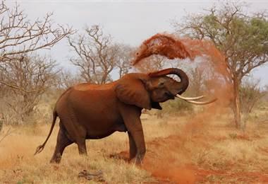 Milicias y cazadores furtivos son una amenaza para la fauna de África central
