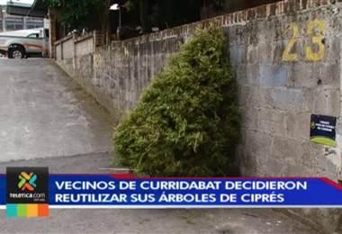 Vecinos de Curridabat decidieron reutilizar sus árboles de ciprés