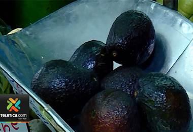 Asociación de Consumidores de Costa Rica pide levantar la veda para importar aguacate de México