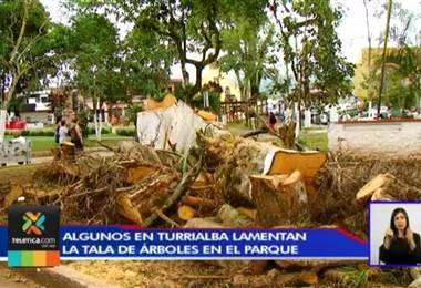 Vecinos lamentan la tala de árboles en el parque de Turrialba