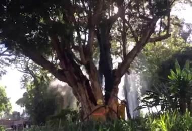 Bomberos atienden fuego en un árbol del Parque España.