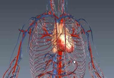 Aprenda cómo puede conocer la edad de sus arterias y por qué esto es importante