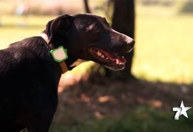 Hoy en día pasear libremente a nuestro perro no debe suponer un problema, y que él pueda correr tan lejos como quiera tampoco. Para ello, se han creado los collares GPS, para poder localizar en todo momento. En el mercado podemos encontrarlos diferentes tipos y marcas, pero hoy le mostramos Findster Duo, un gadget con radar integrado, capaz de informarnos que el perro se acerca a zonas que no debe.