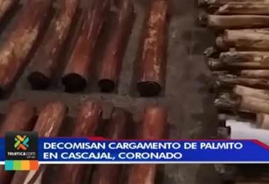 Guardaparques decomisaron en Coronado cargamento prohibido de palmito silvestre