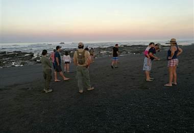 Tortugas lora en playa Ostional