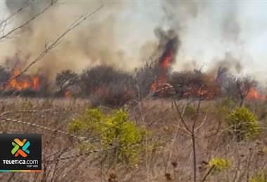 Sistema de Áreas de Conservación no baja la guardia ante los incendios forestarles