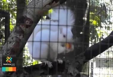 Ardillas, pájaros y búfalos albinos sorprenden en nuestro país
