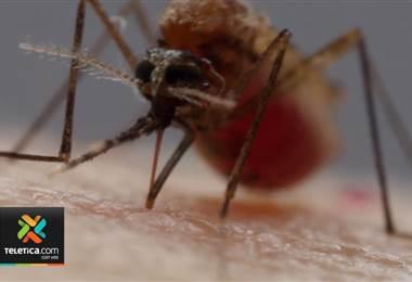 Ministerio de Salud analiza casos de malaria en la Zona Norte del país