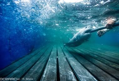 """Hilton, el tiburón que """"tuitea"""" su travesía por el océano y que tiene miles de seguidores"""