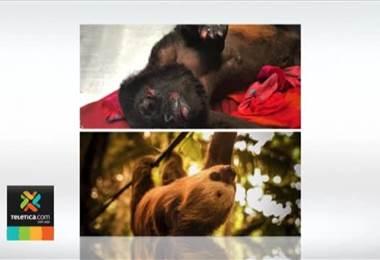 Campaña busca evitar que decenas de animales mueran electrocutados en cables en el Caribe