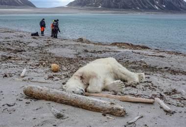 Matan a un oso polar durante un encuentro con turistas en el archipiélago Svalbard en Noruega