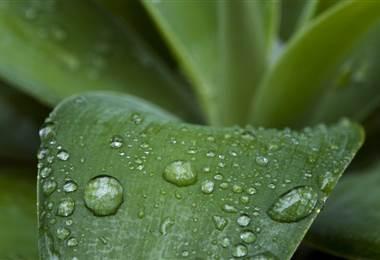 Petricor, la razón por la que la lluvia huele tan bien