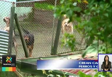 Crean campaña para adoptar perros y gatos en abandono