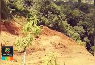 Lluvias de las últimas horas provocaron un deslizamiento en el cerro El Tablazo en Santa Ana