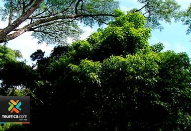 Costa Rica y EE.UU. buscan proyectos para destinar fondos a conservación de bosques