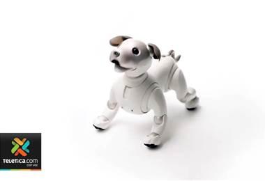 ¿Quiere tener una mascota divertida y que su única preocupación sea cargar sus baterías?