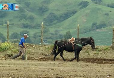 La vida de los agricultores de Oreamuno