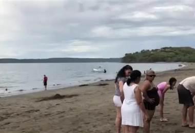Colonia de erizos en playa Panamá