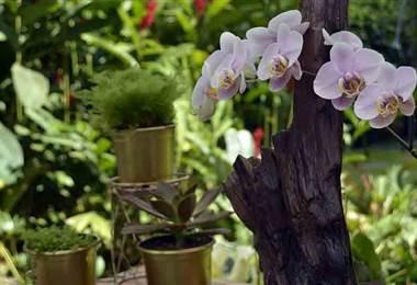 Aprenda a decorar su hogar con arreglos florales