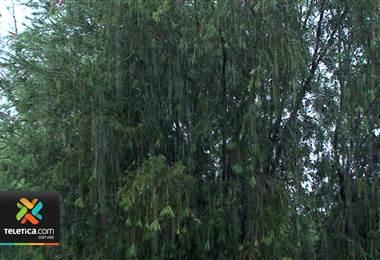 Nueva onda tropical llegaría entre noche del miércoles a jueves