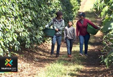 Samuel y Junior recogen café todos los días para comprar sus útiles escolares