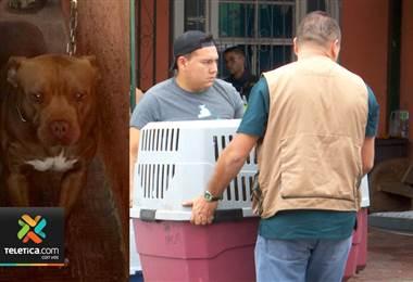 OIJ y Fiscalía allanaron casa en donde perro atacó a bebé de 11 meses