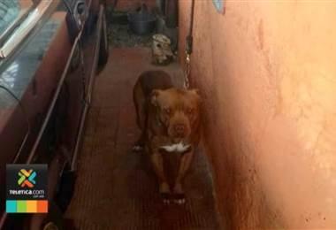 En los últimos 7 años el Senasa atendió 1652 emergencias con perros