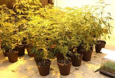 PCD detuvo a seis sujetos sospechosos de cultivar marihuana