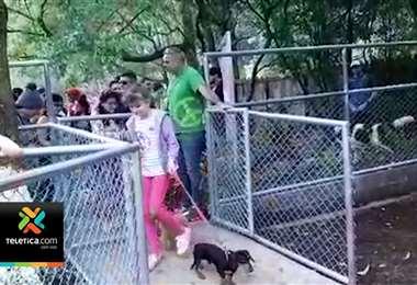 Con materiales reciclados construyeron un parque para perros en San Rafael de Heredia