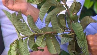 Plantas que ayudan a perder peso