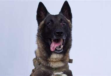 Perro llamado Conan