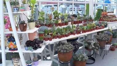 Le enseñamos cuales plantas son ideales según espacio y estilo de vida