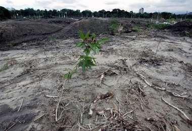 Presencencia  de narcotrafico causa deforestacion