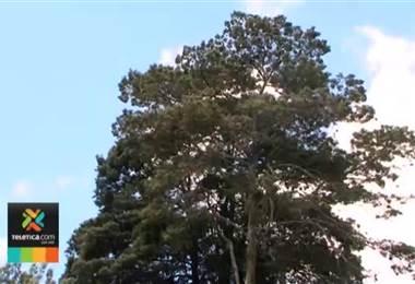 Vientos de hasta 115 km por hora ocasionaron la caída de rótulos, árboles y hasta casas destechadas