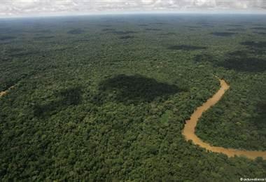 América Latina es el continente que entre 1990 y 2015 más ha deforestado. DW