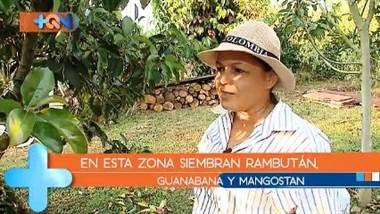 Marleny e Isidra nacieron en Buenos Aires de Puntarenas, pero ya tienen más de una década de vivir en Pérez Zeledón, aquí sembraron frutas de otros países que ahora disfrutan junto con la familia. Además ambas son personajes del barrio que nos divertirán con sus ocurrencias.