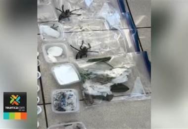 Detienen a dos hombres que intentaban traficar diferentes especies de arañas y hormigas vivas