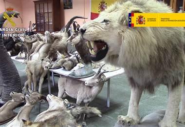 Taxidermia. Foto: Gobierno de España