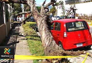 Carro estacionado sufrió daños por la caída de un árbol en Sabana norte