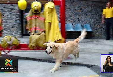 Fallece Kenay, el perro bombero que ayudó en importantes labores de rescate por 7 años