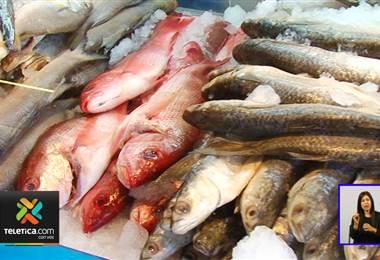 Un estudio encontró plástico en peces del Pacífico costarricense.