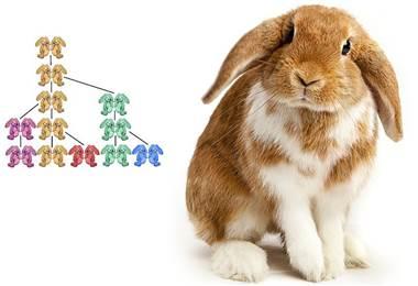 Fibonacci empezó estudiando los conejos