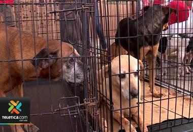 Adopción de mascotas. Foto de archivo.