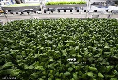 El cultivo high-tech de verduras prolifera