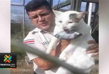Policía Penitenciaria atrapa gatos que intentaban ingresar droga a centros penitenciarios