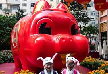 Año del cerdo calendario chino. BBC Mundo