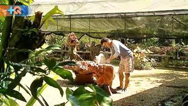 En Roxana de Pococí don William trabaja esculturas en madera hace 11 años, él toma lo que la naturaleza ya no necesita y lo convierte en obras de arte.   Él es el encargado de crear el presente que envía esta comunidad limonense al cantón josefino que visitaremos la próxima semana.   Si desea contactarlo puede llamarlo a los números: 2763-1613 / 8402-0211